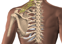 BRACHIAL PLEXUS SURGERY in Chandigarh, India